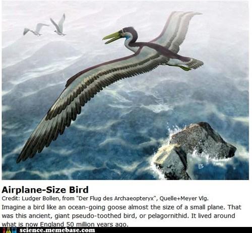 airplane,bird,huge,paleontology,prehistoric
