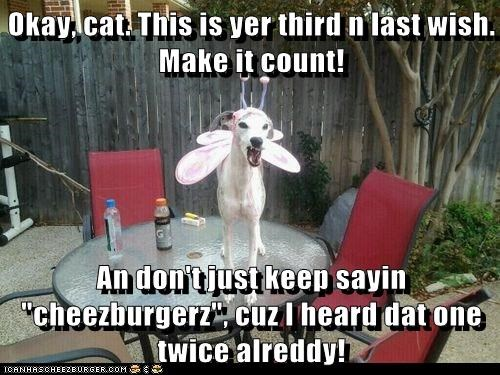 cat cheezburgers fairy whippet wishes - 6362940416