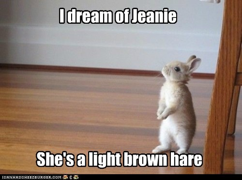 I dream of Jeanie She's a light brown hare