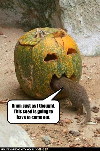 dentist doctor pumpkins seed sick squirrel - 6363199488
