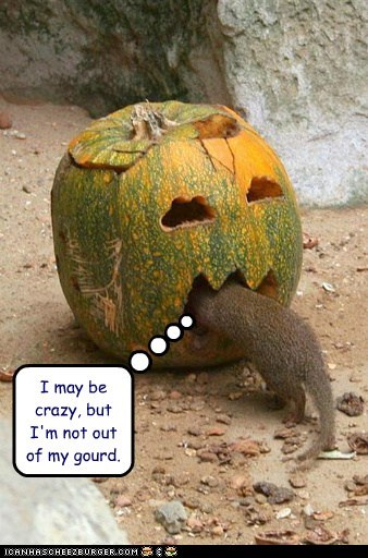 I may be crazy, but I'm not out of my gourd.