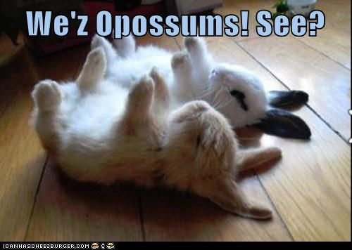 bunnies,caption,opossum,playing dead,rabbits,sleep