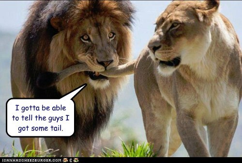 bragging,if you know what i mean,lions,tail