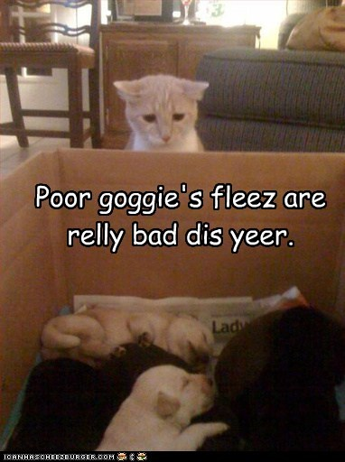 Poor goggie's fleez are relly bad dis yeer.