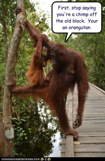 child,chimp,climbing,get it right,orangutan,parenting,puns,stop
