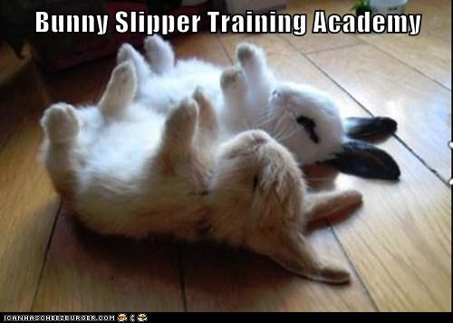 back bunnies bunny slippers captions lying down sleeping training - 6364008192