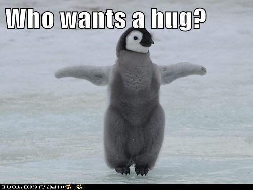 baby best of the week cute Hall of Fame hug penguin - 6364029696