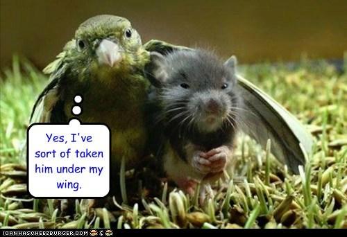 bird friends hug mouse raising teacher wing - 6364230912