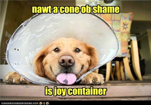 best of the week,cone of shame,dogs,Hall of Fame,happy,Joy,smile,tongue,what breed