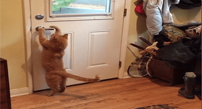 instagram videos of cats