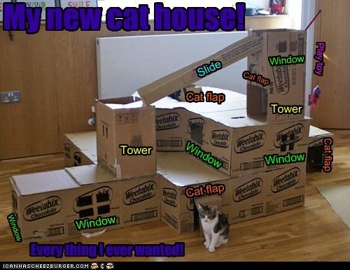 Cheezburger Image 6365054976