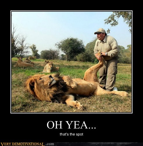 foot,hilarious,lion,massage,wtf