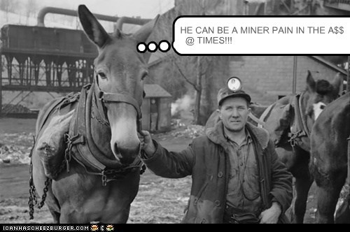 donkey Lame Pun Coon miners minor pain in the ass puns - 6365303040