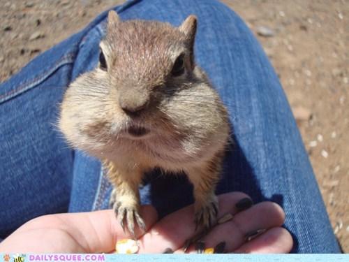 chipmunks seeds nuts food squee - 6365498624