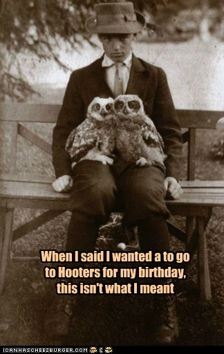 captions disappointment hooters meant owls puns understanding