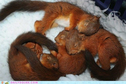 baby,cuddle puddle,sleeping,snuggle,squee,squirrels