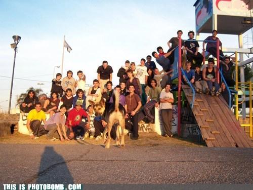 animal Animal Bomb butt dogs kids - 6366794496