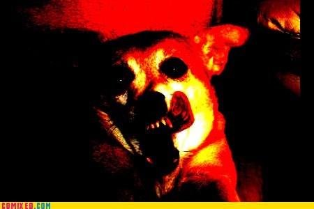 Cheezburger Image 6366984448