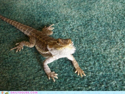 bearded dragon carpet lizard pet reader squee - 6367141120
