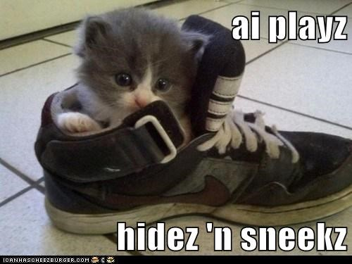 captions Cats cute game hide and seek hiding if it fits lolcats play shoes sneaker squee tennis shoe