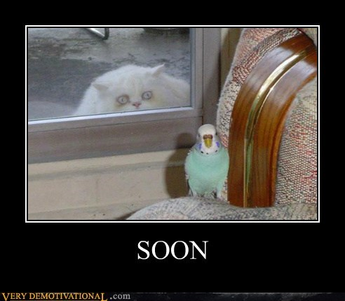 bird cat hilarious hungry SOON