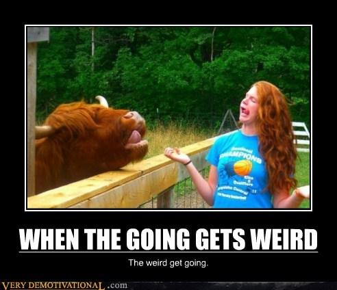 cow,hilarious,redhead,weird