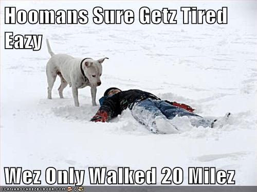 Hoomans Sure Getz Tired Eazy Wez Only Walked 20 Milez