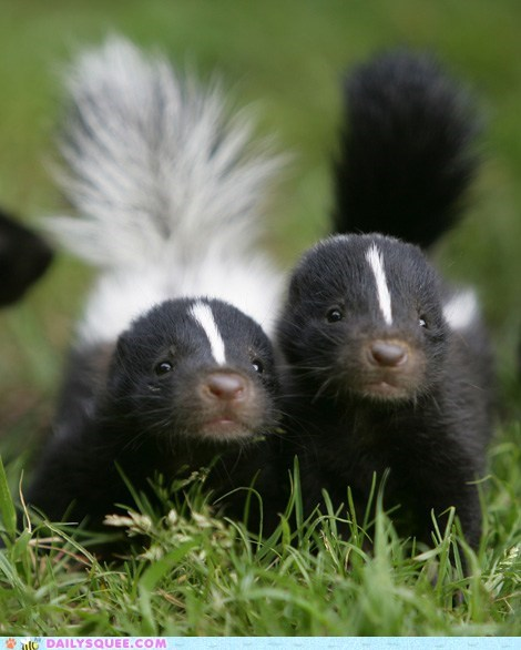 baby,siblings,skunk,skunks,squee,squee spree,tail,winner