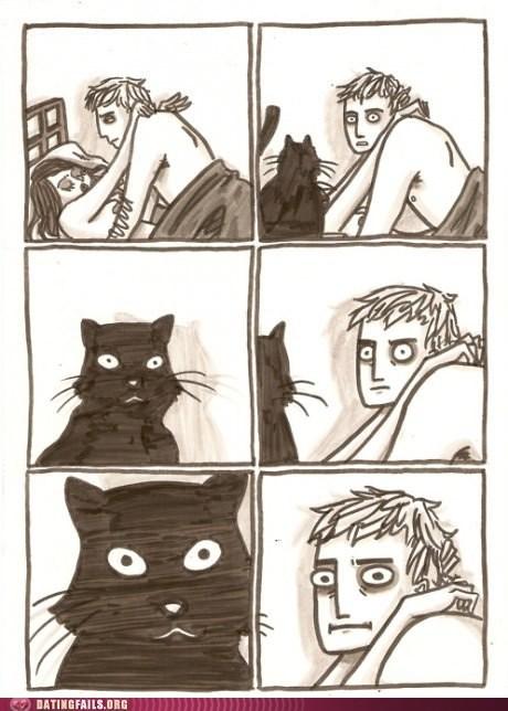 Awkward Cats sexytimes Staring - 6368445696