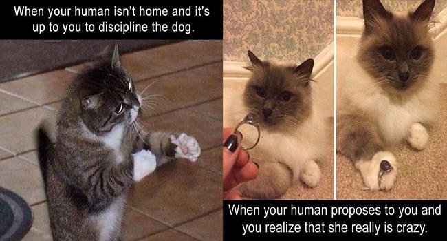 lolcats hilarious funny memes lol memes cute Memes cute cats lol Cats funny weird cat memes - 6368773