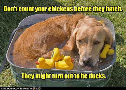 Don't count your chickens before they hatch. They might turn out to be ducks.