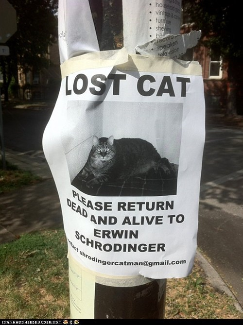 alive,best of the week,Cats,dead,lost,schrodinger,schrodingers-cat,signs