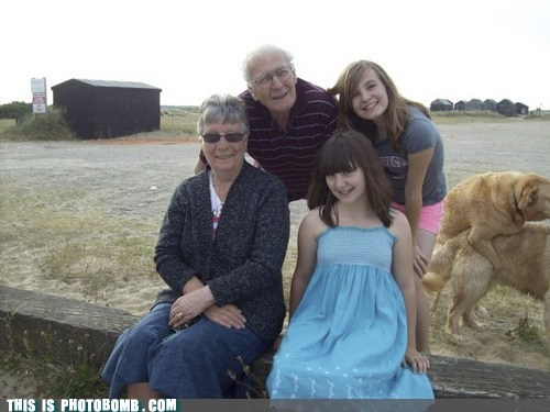 animal Animal Bomb cute dogs family photo - 6369088256