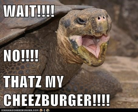 Cheezburger Image 6369214208