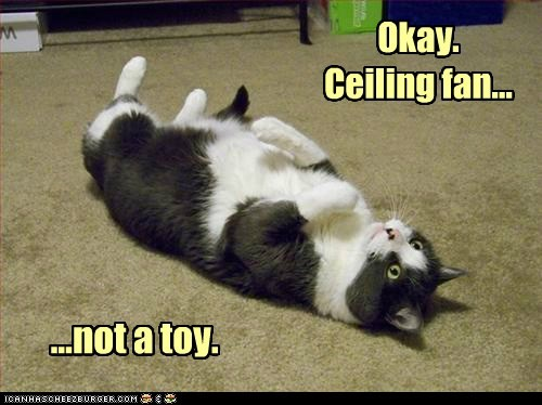 bad idea,Cats,ceiling,ceiling fan,FAIL,fall,fan,fly,toy