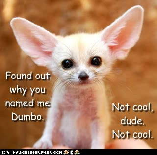 best of the week caption dumbo ears fennec fox Hall of Fame insulted name not cool - 6369679104