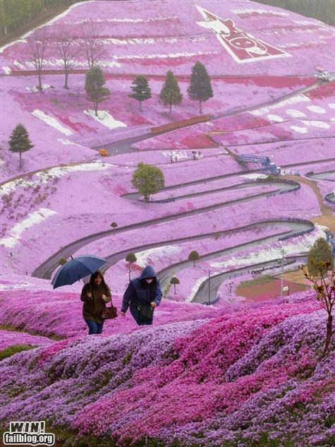 flowers mother nature ftw nature oh Japan photography Travel wincation