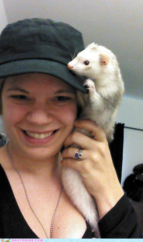 accessory,ferret,hat,pet,reader squee