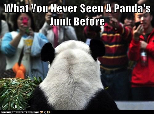 panda,political pictures