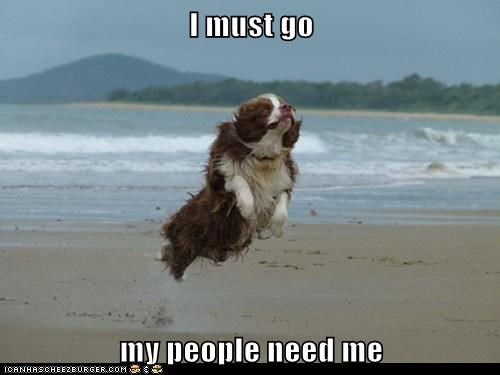 beach beaches captions dogs flying hovering i must go my people need me what breed