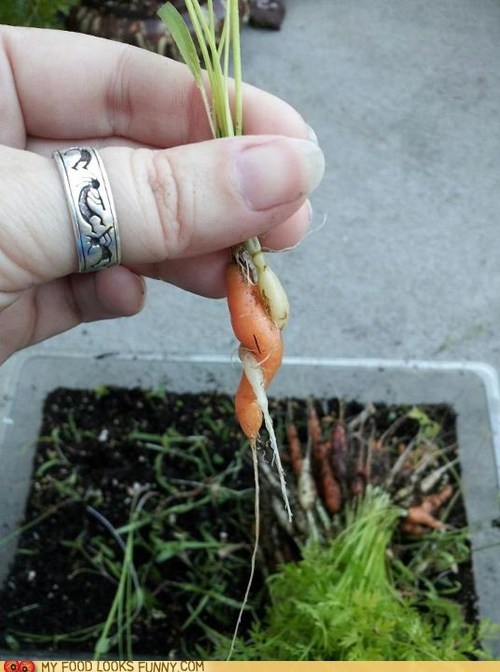 Carrot love does not discriminate