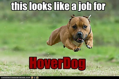 dogs floating hoverdog levitating pitbull - 6370836480