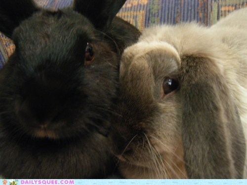 best friend forever,happy bunday,pet,rabbit,reader squee