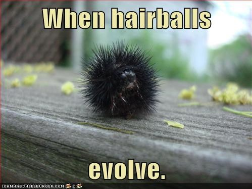 does-anyone-know evolution Growing hairballs help scary sentience what is this