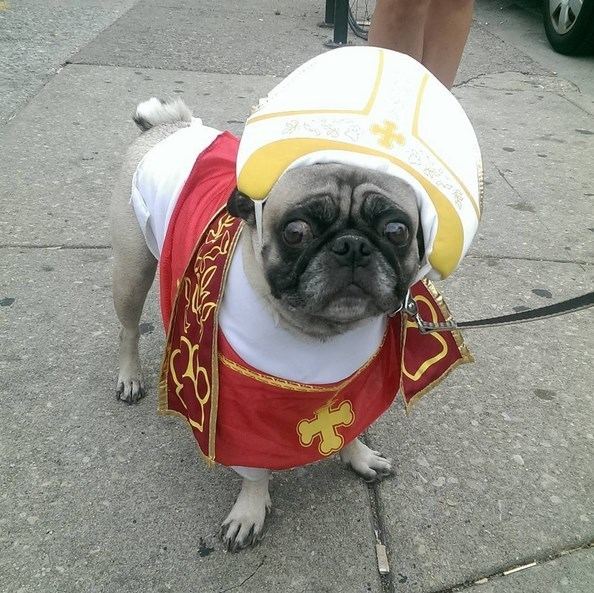 costume dogs list pope cute - 637189