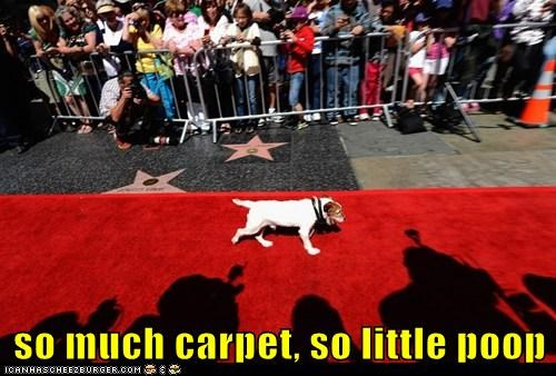 dogs political pictures red carpet - 6372183552