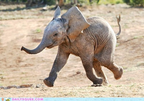 elephant squee baby dancing happy weekend - 6372357888