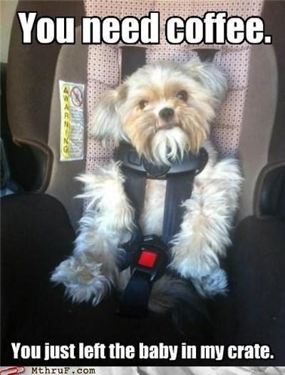 baby car seat dogs espresso espresso shots Hall of Fame - 6372625408
