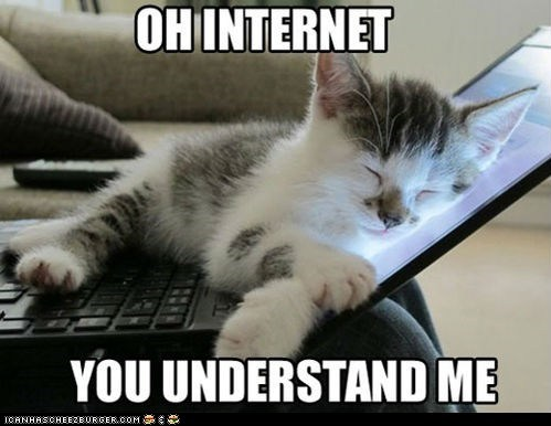 Cats computers internet laptops lolcats Memes Oh you understand me - 6372674048