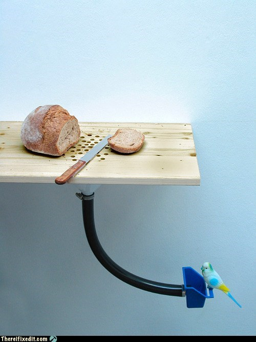 bird,bird feeder,bread,breadcrumbs,cutting board,Hall of Fame,kitchen